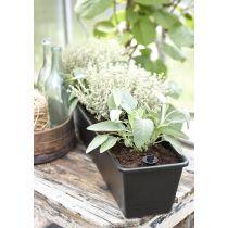 orthex Blumenkasten BALCONY, Breite: 750 mm, schwarz